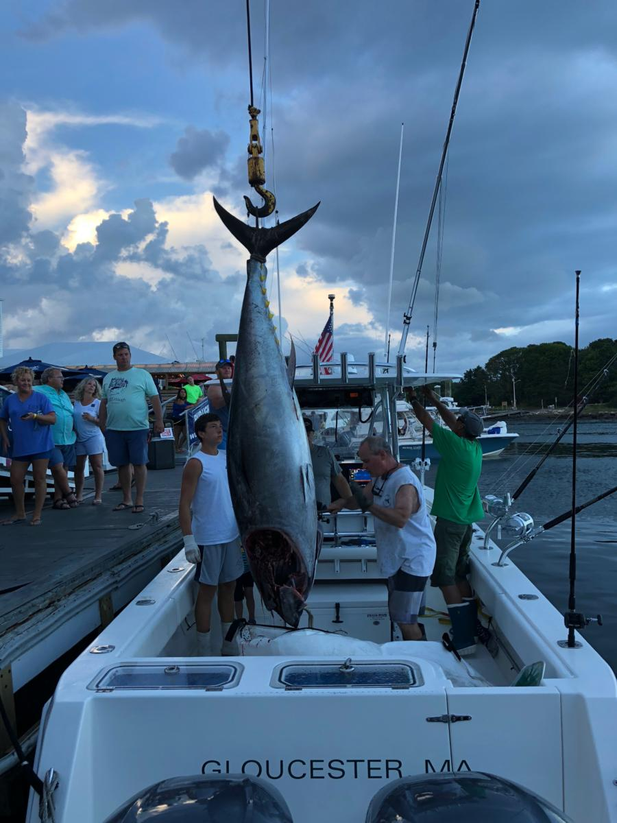 About the Bluefin Blowout – Bluefin Blowout